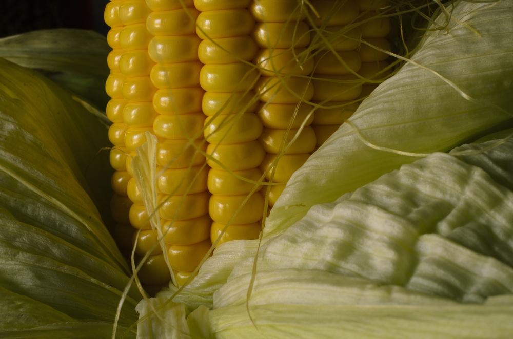 propriedades do milho