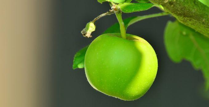 maçã verde propriedades