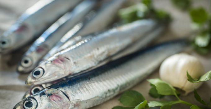 Principais características da anchova