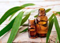 Benefícios do Eucalipto para a saúde