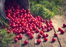 Benefícios do Cranberry para a saúde